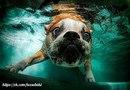 Собачьи развлечения в бассейне