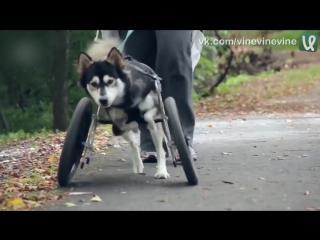 Собака, которая впервые смогла побегать