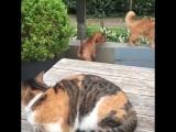 Кот защитил собаку от другого кота