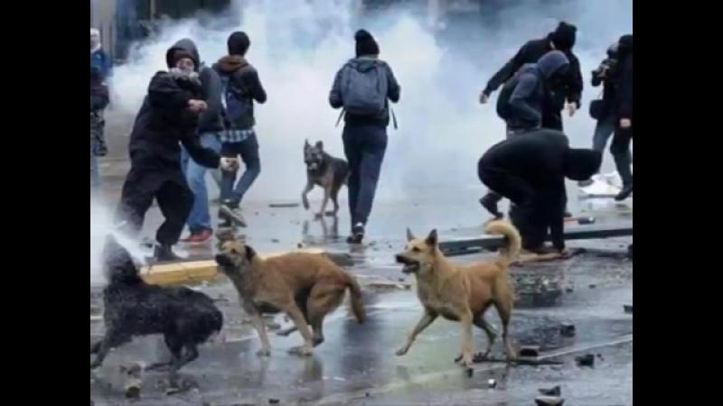 Taksim Gezi Parkı Direnişi Hasta Siempre, Comandante Che Guevara HD).mp4