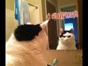 Приколы с котами и смешная ОЗВУЧКА – Тест на психику – РЖАКА ДО СЛЁЗ с PSO