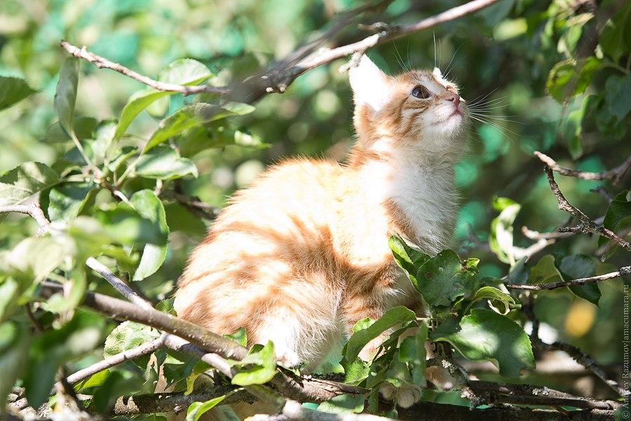 рыжий котенок на дереве