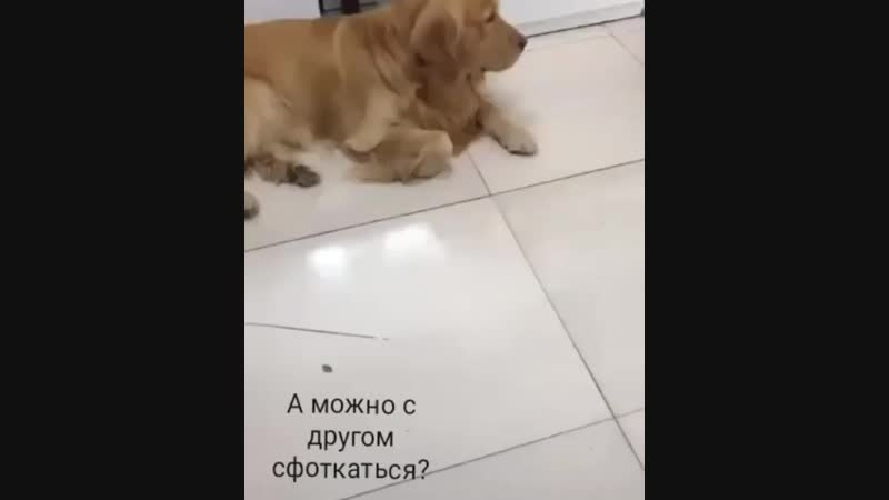 Snegirev_pavel_video_1548156059374.mp4