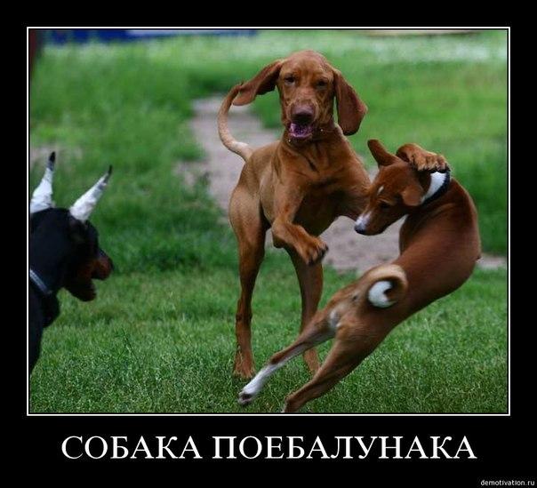 Собака-поебалунака