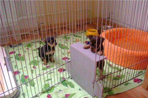 Вольер для маленьких собаки своими руками
