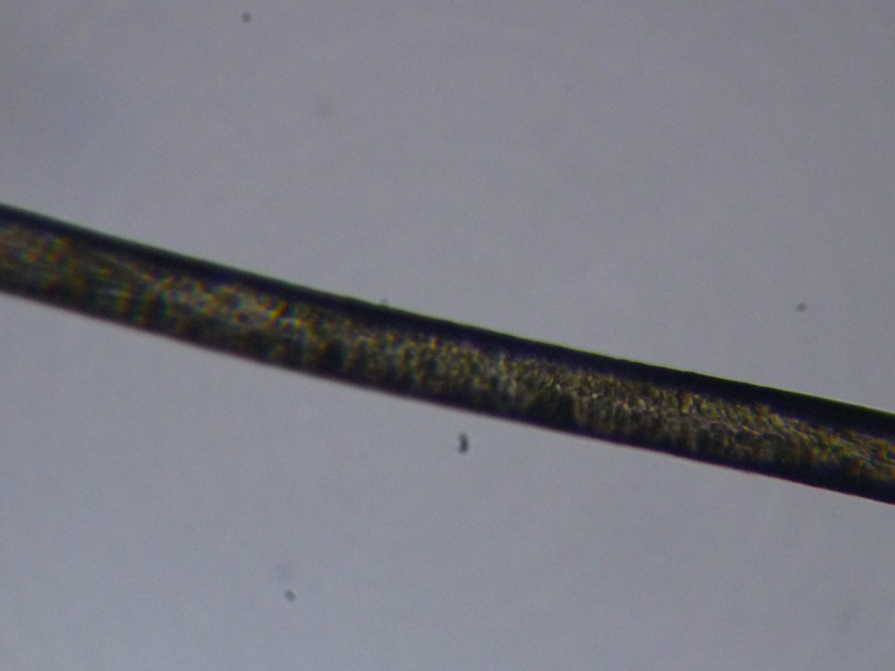 волос через микроскоп