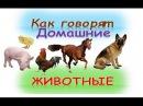 Развивающий мультфильм для детей Как говорят домашние животные со звуками Как говорят животные.