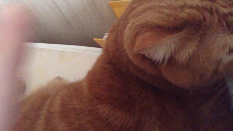 2262). 15.01.2017 - Котик Боня живет дома (видео из дома)