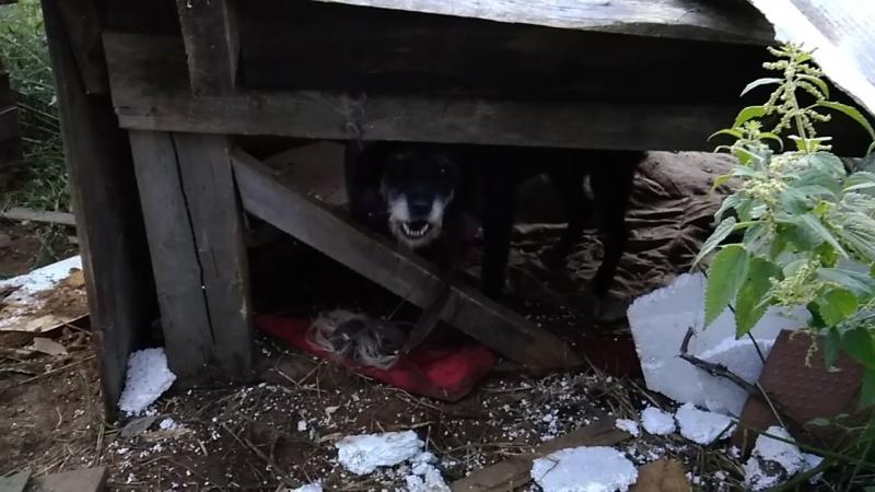 Кулотино нашли привязанную собаку