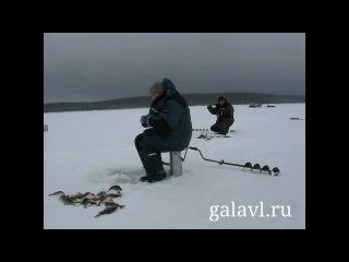 Супер рыбалка на Рыбинском Море. Окунь на балансир.