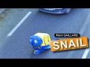 The snail (Rémi GAILLARD)