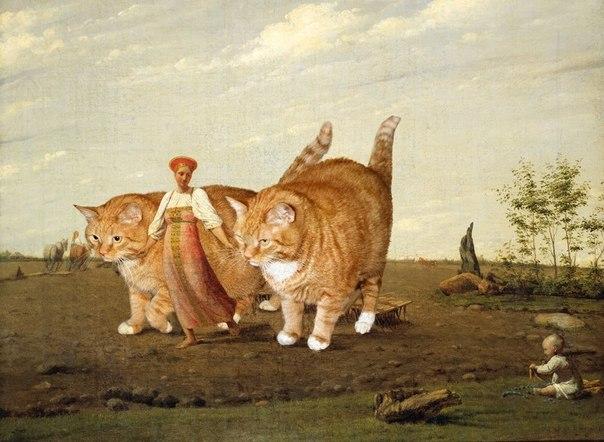 выгул котов