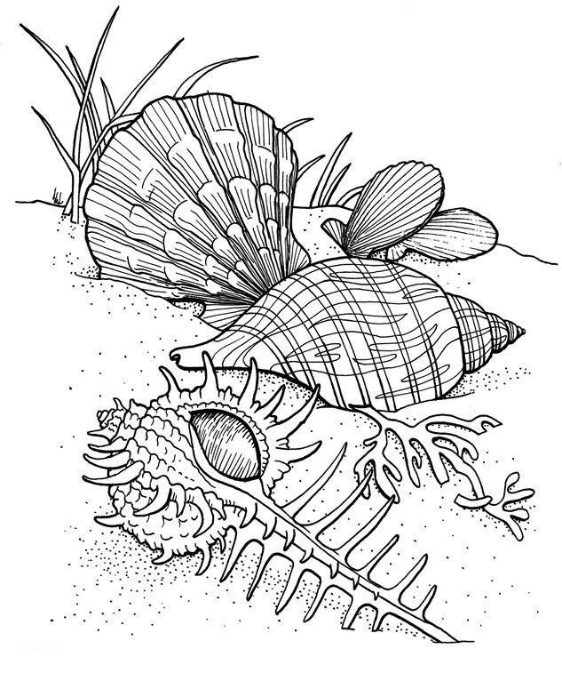 сложные раскраски для взрослых подводный мир море океан