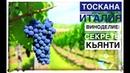 Италия Тоскана вино: винный тур в Италию и виноделие зоны Кьянти (Chianti Italia) Авиамания