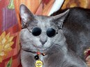 Алёна Шендрик фото #17