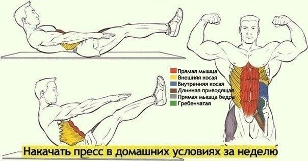 Как качать спину мышцы в домашних условиях 41