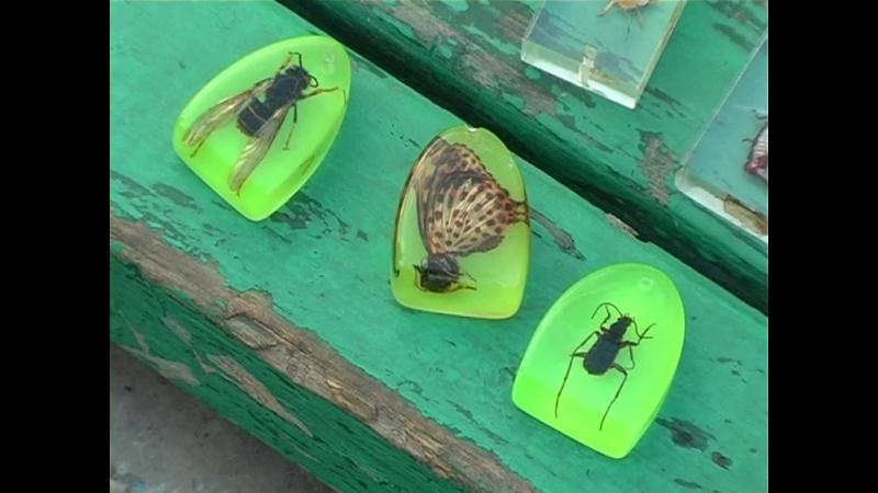 02 Коллекционер насекомых 11 04 2007