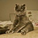Что бы ни произошло, я просто обязана с утра посидеть на кровати минут пять…