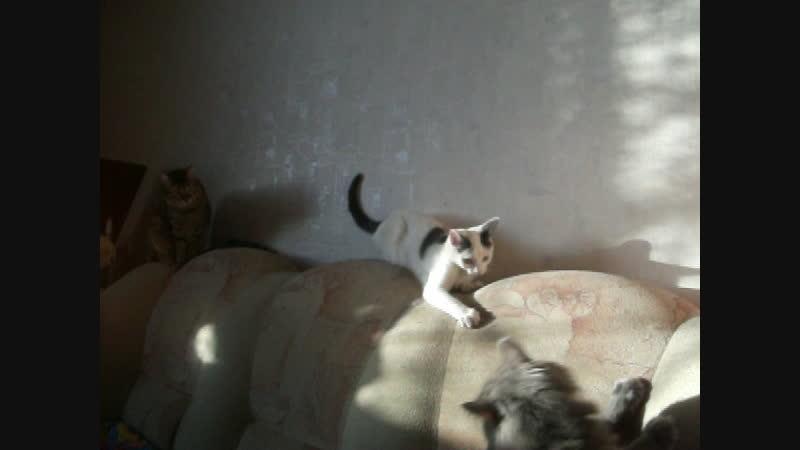 Шаня, немного Муськи и брутальный мой Серый