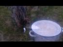 🐟🐯 кот Тоби ловит себе рыбку