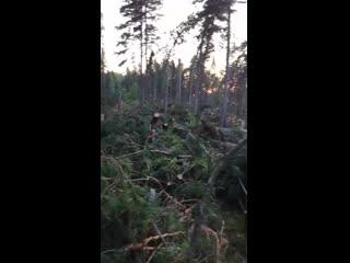Последствия грозы с сильным ветром на кладбище в Лесосибирске (Красноярский край, 10 июля 2019).