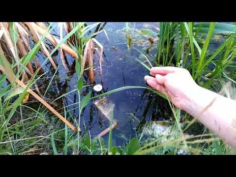 Суровые Челябинские жабы и Ксюша девочка