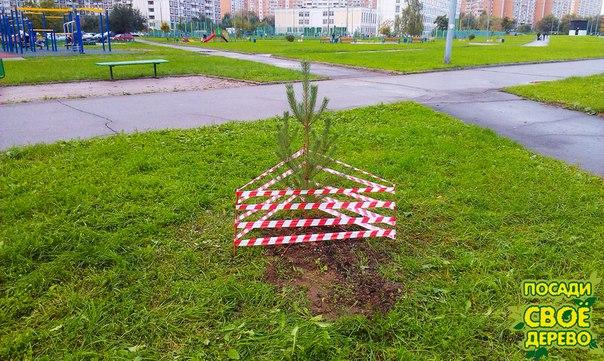 Ограждения для саженцев деревьев