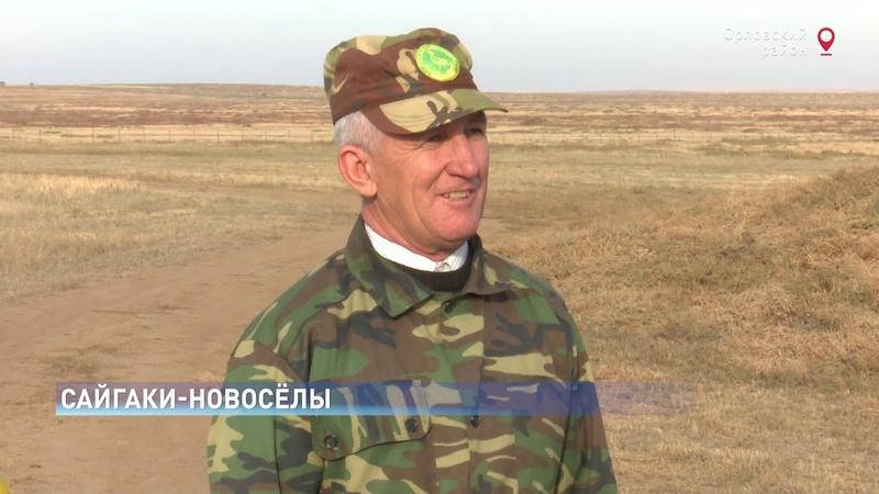 Впервые за 30 лет: На Дону выпустили в дикую природу краснокнижных сайгаков