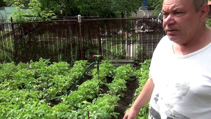 Богатый урожай за счёт Эм-Эко с Кумицким Олегом Петровичем.