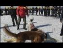 Стенка ВКО-Россия 18.03.2017 г. 7 ролик