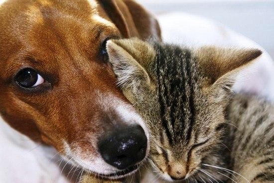 к домашним животным,...