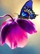 "Схема вышивки  ""Бабочка на цветке "" ."