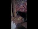 Мая кошка Люси