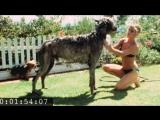 Sharon Tate bathing Patty Duke's dog Shadrack at Summitridge Drive #4 (1968)