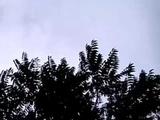 Strange Weird 'Trumpet' Sounds from the sky of Brazil