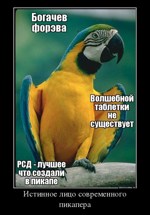http://cs14110.vk.me/c619916/v619916923/1bbba/L7lfLgwscGg.jpg