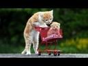 СМЕШНЫЕ КОТЫ ДО СЛЕЗ - Смешные животные коты собаки и другие приколы про кошек 2018