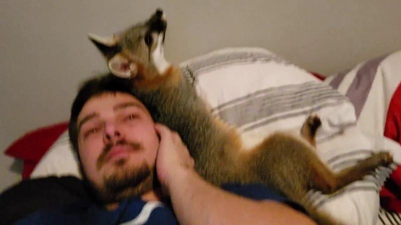 A fox marking her territory Tyler =
