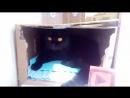 Истории от кошки Багиры часть 2