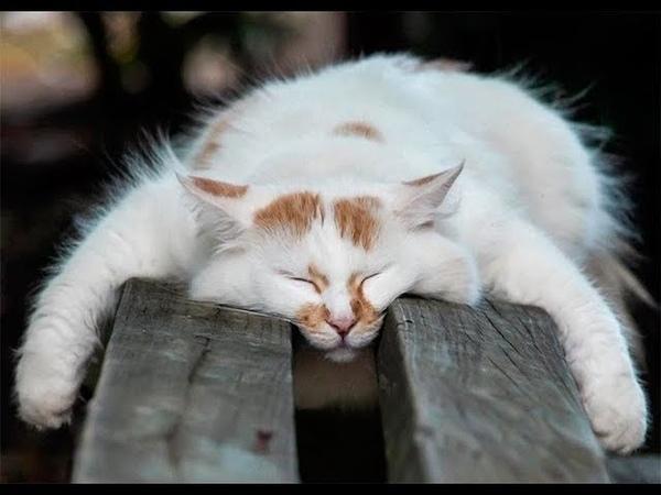 СОБЛЮДАЙТЕ ТИШИНУ...ЗДЕСЬ СПЯТ КОТИКИ)) Sleeping cat
