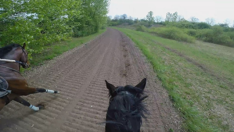 Gallop Sparing with FAST Speed average 55 KmH. GOPRO 5
