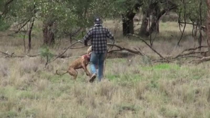 Шоооок! человек против кенгуру смотреть всем HD качестве ( 240 X 426 ).mp4