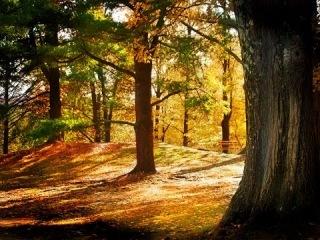 Фото слайд-шоу Природа. Лес. Часть 2.