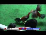 Pelea #6 TRABA J.A. Vs HDA GUAROA 1606198 - Club Canca