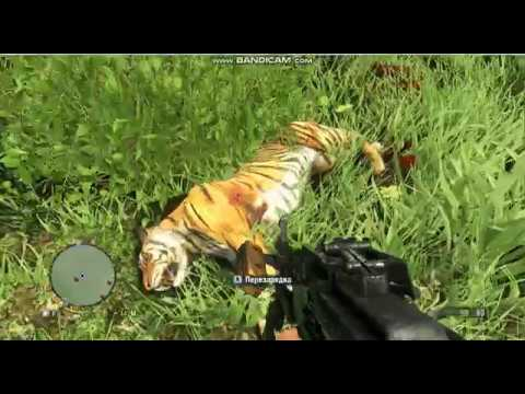 тигры нападают охота тигров