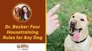 Четыре правила для любой собаки живущей в доме Four Housetraining Rules for Any Dog