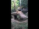Контактный зоопарк с милыми «кошками»