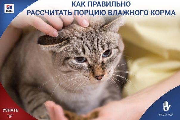 new flea treatment for cats 2014
