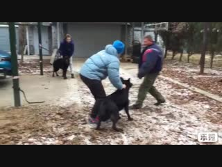 Хильда ЗКС