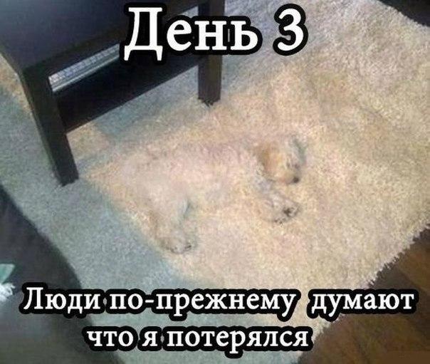 https://pp.vk.me/c310830/v310830105/68e3/SoTCg_O6WMw.jpg